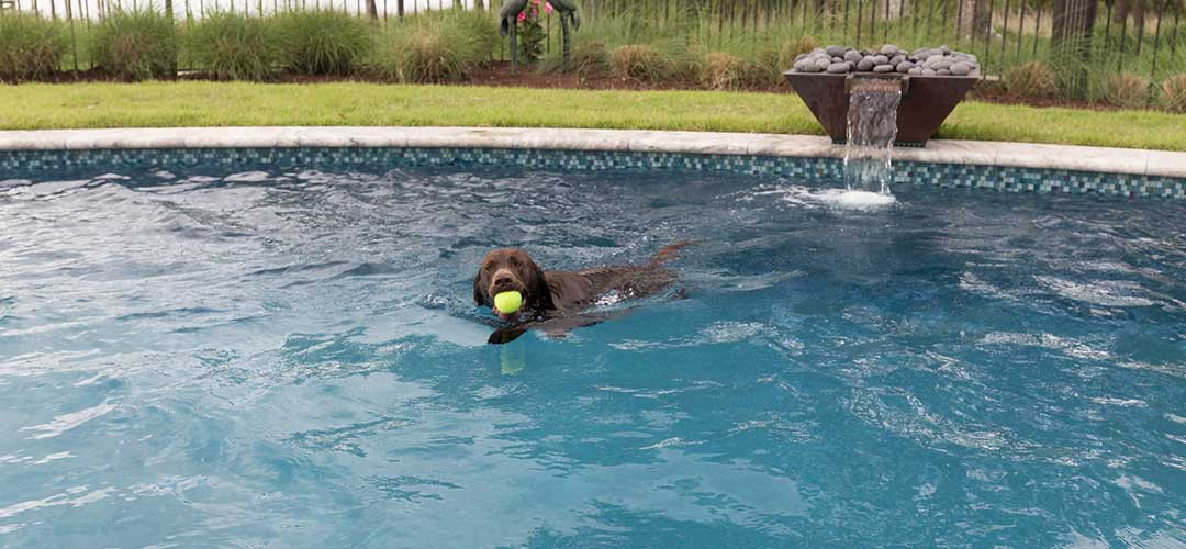 swimming pool with puppy swimming